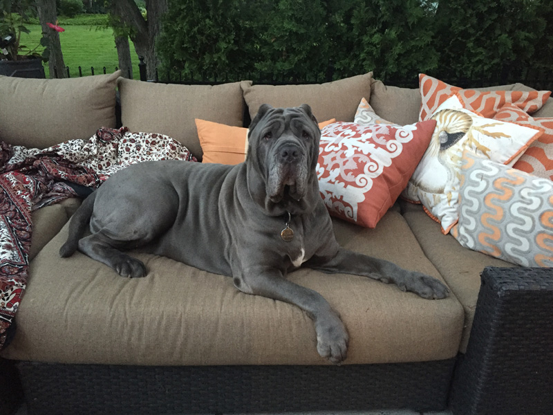 Monday's pets on furniture